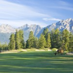 Elk Grazing on Jasper Park Lodge Golf Course
